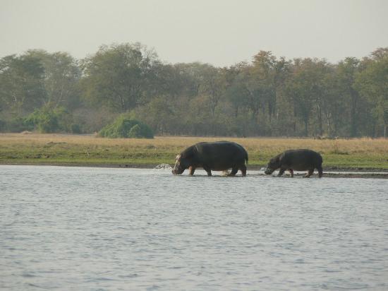 Central African Wilderness Safaris Mvuu Camp