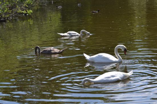 Teich Bird Reserve (Le Teich, France)