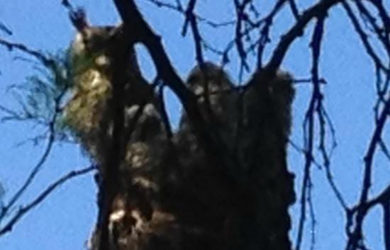Miraval Arizona Resort & Spa: Owl's!