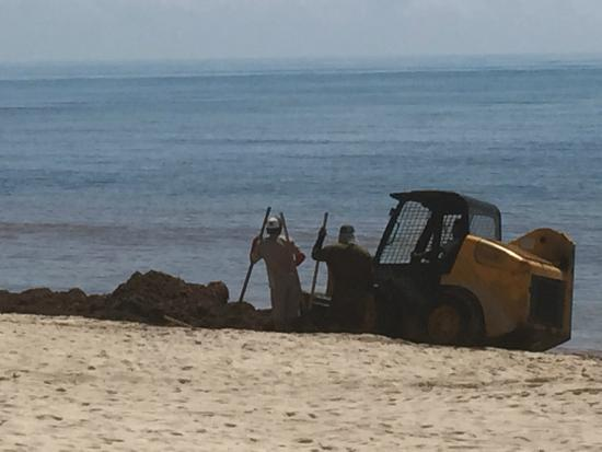 Dreams Tulum Resort & Spa : Clearing seaweed with digger all day
