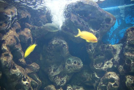 Bodorka Balaton Aquarium