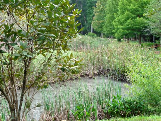 Alpharetta, GA: larger pond and native flora