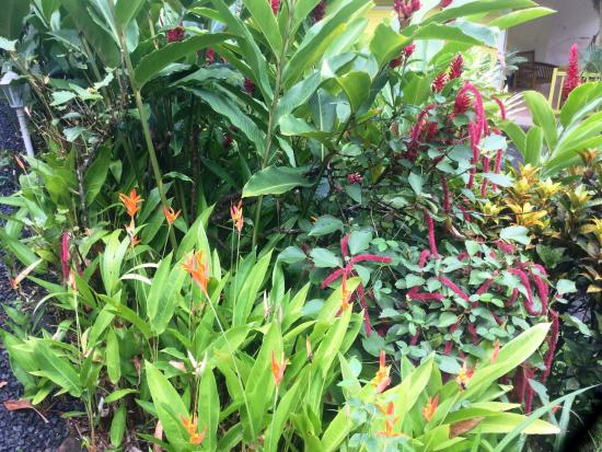 Les Jardins de l'esperance : Végétation caraibe partout