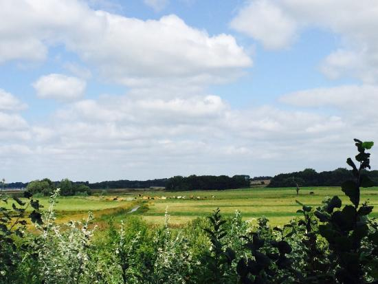 Suffolk Wildlife Trust at Trimley Marshes
