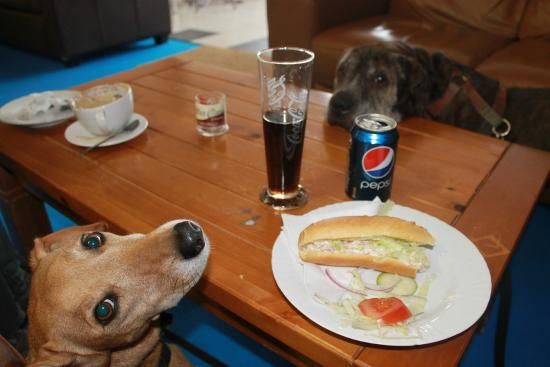Coffee Cove: Dog friendly cafe