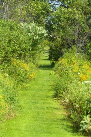 Swanton, VT: Further down path in Steven's Marsh