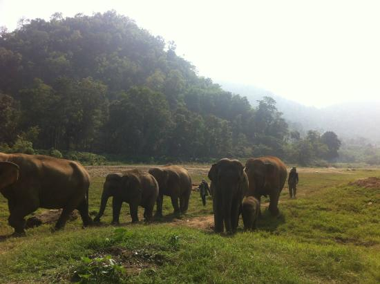 Elephant Nature Park: Beautiful day walking with the elephants
