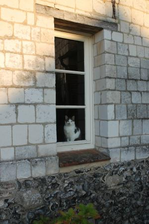 Pas-de-Calais, Francia: The cat keep close watch on me