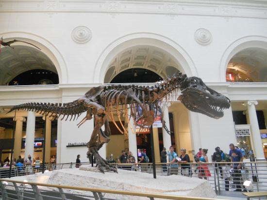 Dinosaur Picture Of The Field Museum Chicago Tripadvisor