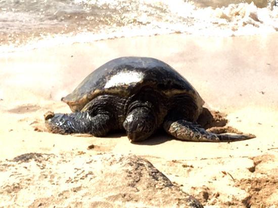 Paia, Hawái: photo5.jpg