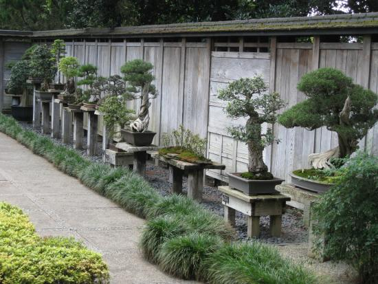 Collections and Botanical Gardens Bonsai display (Japanese Garden