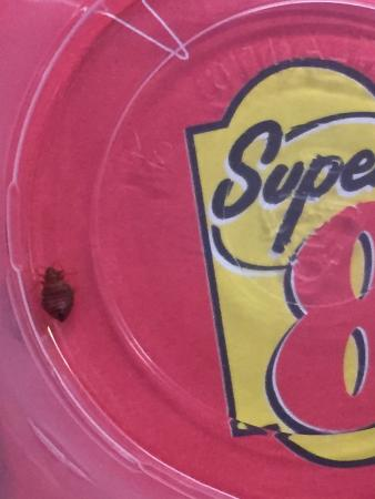 Super 8 Chester/Richmond Area: Infested with bed bugs!