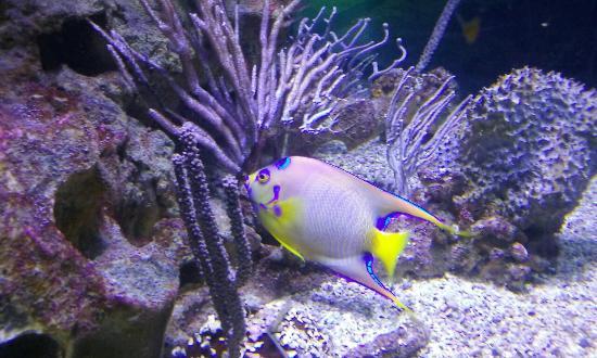 Aquarium de la Guadeloupe - Picture of Aquarium de la Guadeloupe, Le ...