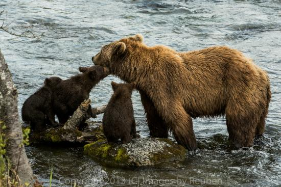 Katmai Adventure Lodge: Brooks Falls