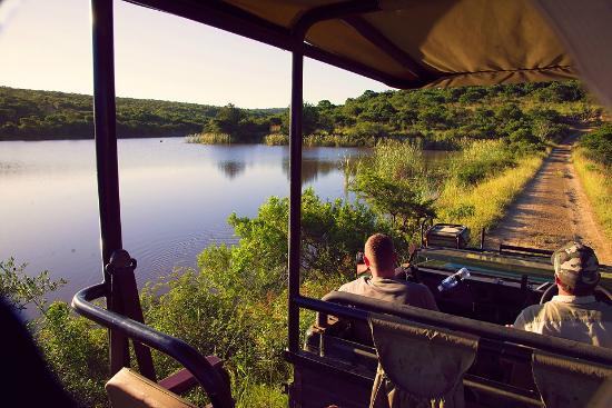 Mpongo Private Game Reserve: Game Drive