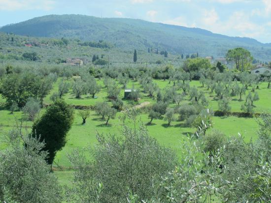 Ristorante Centanni - 1 - Foto di Centanni, Bagno a Ripoli - TripAdvisor