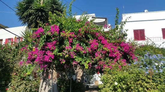 Anna Studios Amorgos: giardino