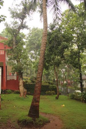 The garden surrounding the Villas