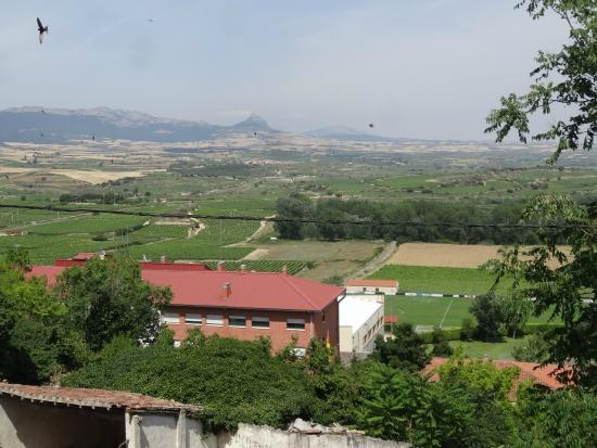 Province of Alava, Ισπανία: VIEW OF RIOJA VINYARDS FROM WALLS