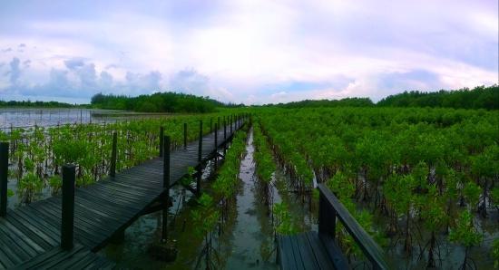 Ban Pak Nam Krasae, Thailand: ทุ่งโปรงทอง1