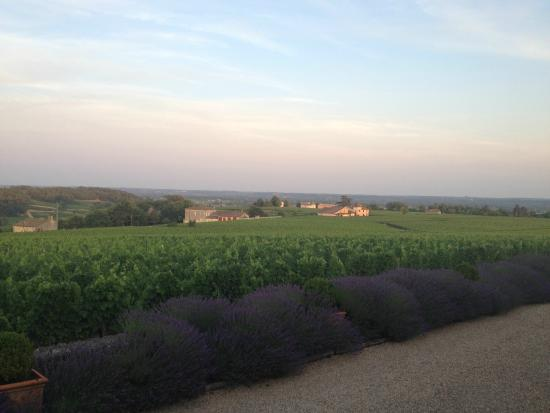 Les Belles Perdrix de Troplong Mondot: Over the vineyards