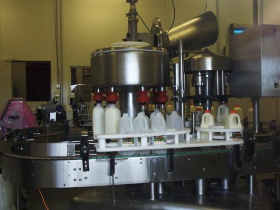 Tamrookum, أستراليا: Bottling the milk