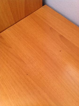 Hotel Columbus : formiche sulla scrivania