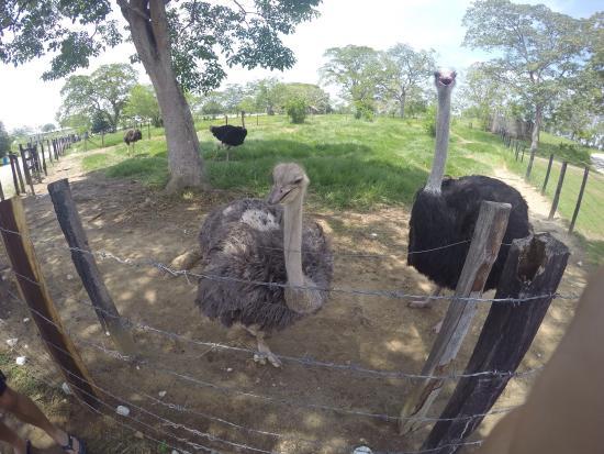 Puerto Triunfo, Colombia: Hacienda Napoles
