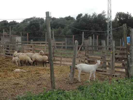 Llabia, Spanien: Zona con animales de granja