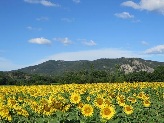 Vagnas, Frankrike: Tournesols