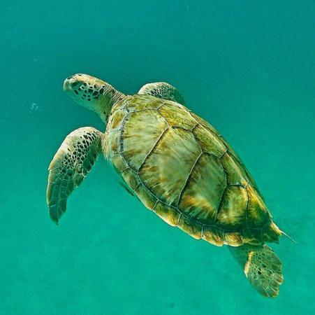 Thriller Ocean Tours: Turtle