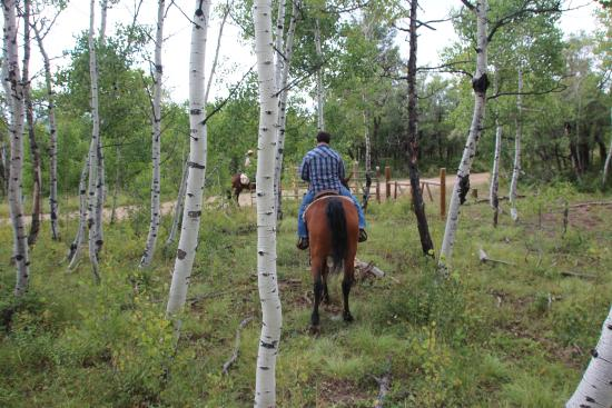 Majestic Dude Ranch : San Juan National Forest riding through the Colorado Aspens