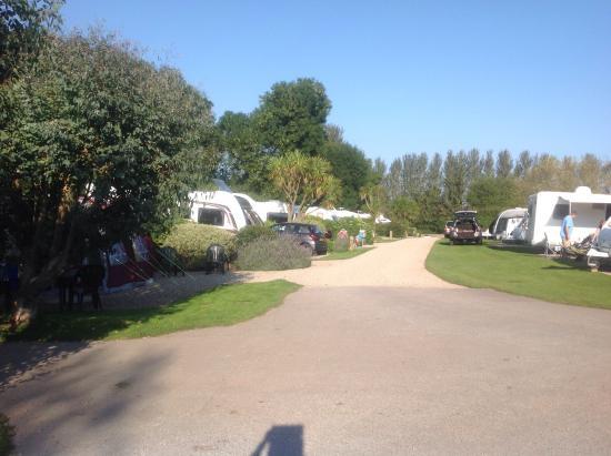Ross Park Caravan Park : Well kept pitches