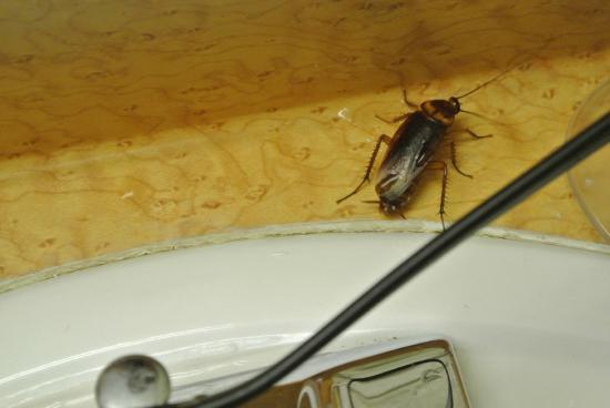 Extend a Suites West Memphis : bug 4