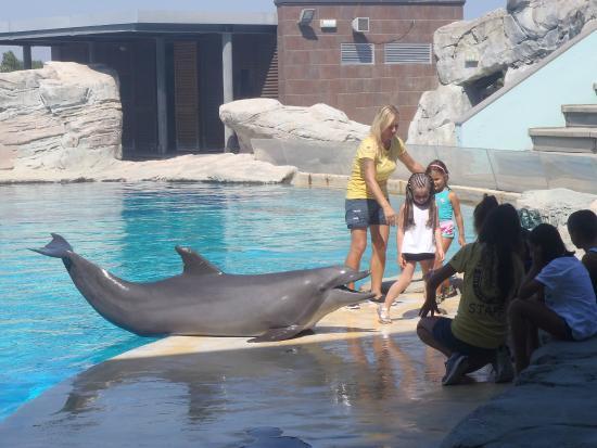 Riccione, Italy: incontro con il delfino Golia