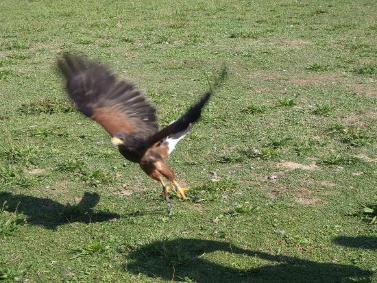 Riccione, Italy: volo dei rapaci