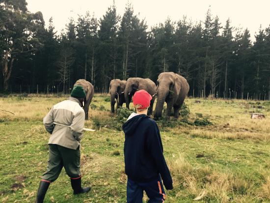 Knysna Elephant Park Lodge