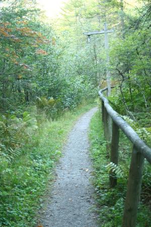 The Waldheim: forest pathway