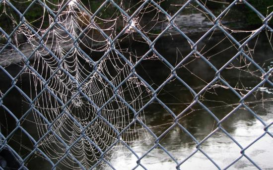 Ranney Gorge Suspension Bridge: Spider webs in the morning dew along the bridge