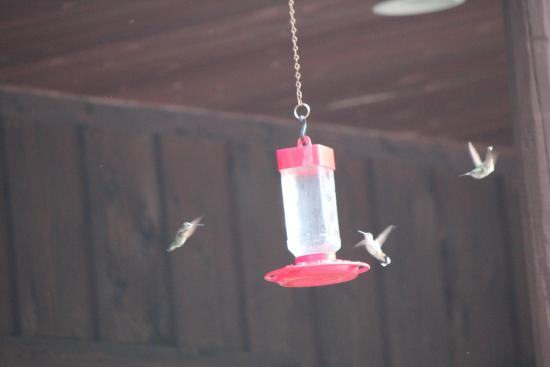 Morning Glory Inn: Hummers Viewing on Inn Porch