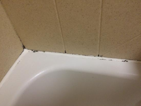 Homewood Suites by Hilton - Greenville: Mold in tub/shower.