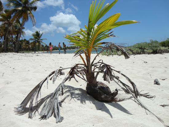 Bayahibe, Dominikanska Republiken: COCOTERO