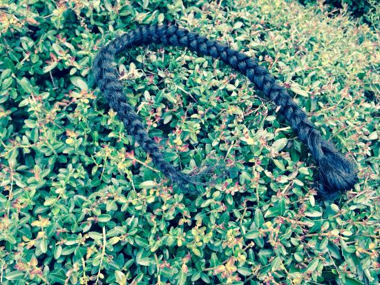 Econo Lodge Inn and Suites Pensacola: Someone's weave decorating the bushes outside the hotel