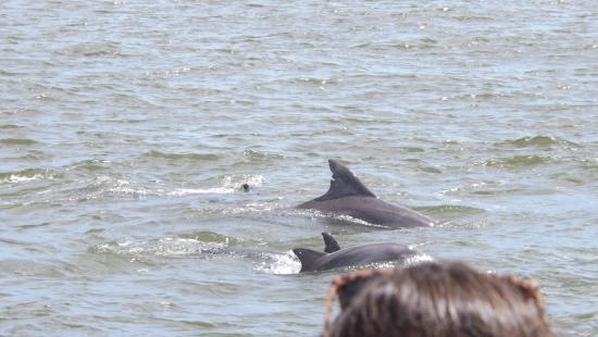 Silver Bullet Tours: Dolphins!