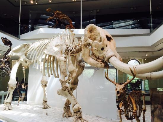 Natural History Museum Los Angeles Mummies