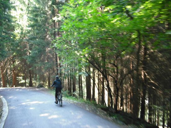 Rifugio Pra' Rodont: Pra Rodont discesa in bici