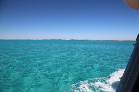 Breaching whale picture of ningaloo reef dive coral bay tripadvisor - Ningaloo reef dive ...