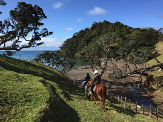 Whangarei, Yeni Zelanda: photo1.jpg