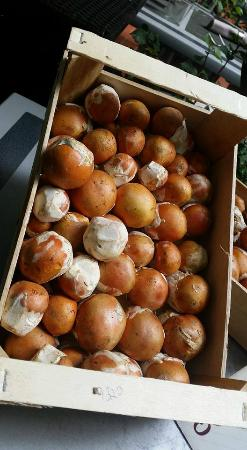 Le Sesflo: Arrivage rare pour les fins gourmets de ce champignon hors du commun!🌟 Les premiers de la sa