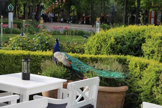 Tivoli garden photo de jardins de tivoli copenhague for Jardin tivoli